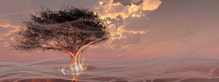 Дерево на пляже Стоковое Изображение RF