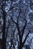 Дерево над драматическим холодным голубым небом стоковая фотография