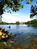 Дерево на реке стоковая фотография rf