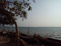Дерево на реке Стоковое фото RF