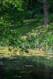 Дерево над рекой шуги Стоковые Фото