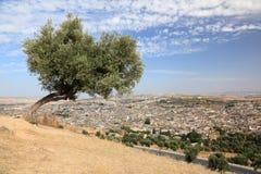 Дерево над старым medina Fes Стоковая Фотография RF