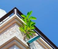 Дерево на стене Стоковое Фото