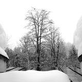 Дерево на стороне балкона Стоковые Изображения RF