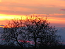 Дерево на сумраке Стоковые Фото
