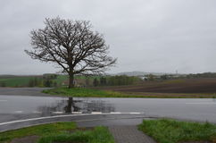Дерево на слабых 7 холмах Biei Hokaido Японии Стоковое Фото
