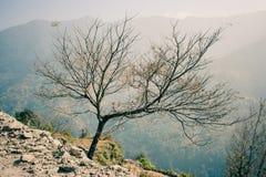 Дерево на треке базового лагеря Annapurna, Непал Стоковое Изображение RF