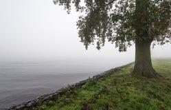 Дерево на туманном утре на краю реки Стоковые Изображения