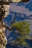 Дерево на утесе Национальный парк грандиозного каньона река США Аризоны colorado horseshoe Известная точка зрения стоковое изображение