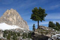 Дерево на утесе стоковое изображение rf