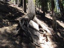 Дерево на утесе Стоковые Фотографии RF
