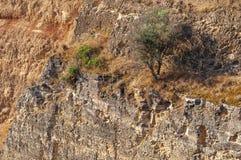 Дерево на утесистой скале Стоковые Фото