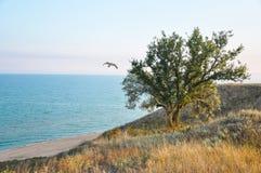 Дерево на холме перед видом на море, полет чаек, светлая солнечность солнечности Стоковое фото RF