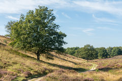 Дерево на холме вдоль пути в пустоши Стоковое Фото