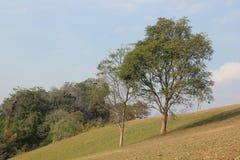 Дерево на холме Стоковая Фотография RF