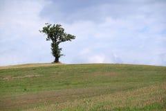 Дерево на холме Стоковое Изображение