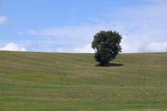 Дерево на холме Стоковое Фото