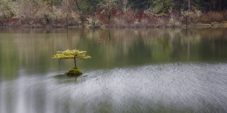 Дерево на Fairy озере, порте Renfrew, ДО РОЖДЕСТВА ХРИСТОВА, остров ванкувер, ДО РОЖДЕСТВА ХРИСТОВА Стоковое Изображение