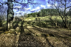 Дерево на landcape Стоковые Фотографии RF