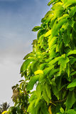 Дерево на morniing стоковые фотографии rf