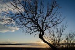 Дерево на sanset на квартирах соли Bonneville, Юте стоковое фото rf
