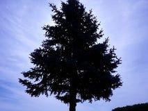 Дерево неба в тенях стоковые фотографии rf
