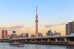 Дерево неба токио в Японии Стоковые Изображения RF