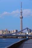 Дерево неба Токио стоковое изображение rf