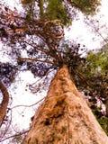 Дерево неба стоковые фото