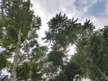 Дерево неба Стоковая Фотография