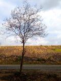 Дерево нет листьев и ветви разрешения падения Стоковое Изображение