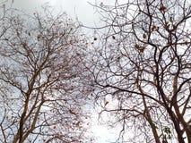 Дерево нет листьев и ветви разрешения падения Стоковые Изображения RF