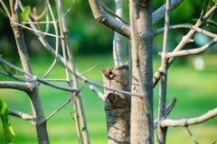 Дерево, новая ветвь разветвляло вне стоковое фото rf