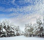 Дерево Нового Года в ландшафте зимы леса зимы красивом с снегом покрыло деревья Валы покрытые с hoarfrost и снежком Beautif Стоковые Изображения