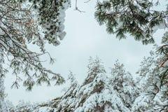 Дерево Нового Года в ландшафте зимы леса зимы красивом с снегом покрыло деревья Валы покрытые с hoarfrost и снежком Beautif Стоковые Фото
