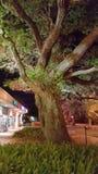 Дерево ночи Стоковые Фотографии RF