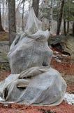 Дерево обернутое мешковиной Стоковые Изображения