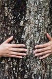 Дерево объятия Стоковые Фотографии RF