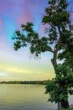 Дерево озера Стоковые Изображения