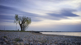 Дерево озером Стоковое Изображение RF