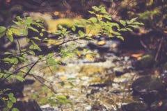 Дерево около воды, красивого ландшафта стоковые фото