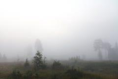 Дерево около дороги и река в тумане Стоковая Фотография