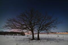 Дерево около дороги на фоне ночи Стоковая Фотография
