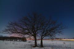 Дерево около дороги на фоне ночи Стоковые Фотографии RF