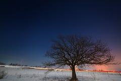 Дерево около дороги на фоне ночи Стоковое Фото