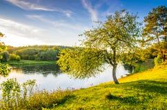 Дерево около реки, сценарного ландшафта природы стоковое изображение rf