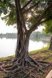 Дерево около озера Стоковая Фотография