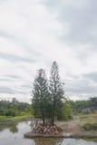 Дерево около реки и много бак Стоковое Изображение RF