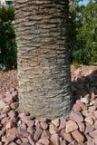 Дерево окруженное утесами Стоковые Изображения RF