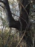 Дерево локтя Стоковые Фотографии RF